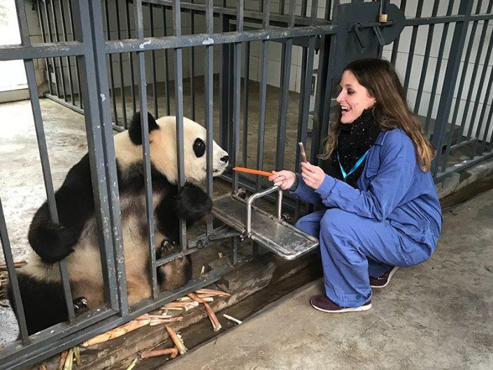 Chengdu, entre buildings et pandas