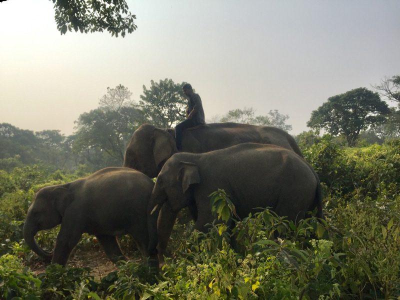 Chitwan, la jungle à l'état pur