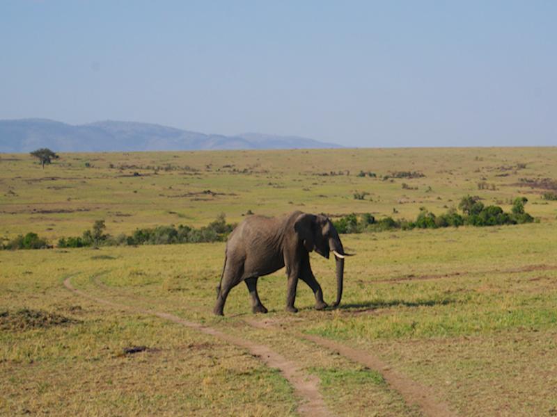 L'immense Réserve du Masaï Mara