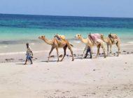 Diani Beach et ses incontournables