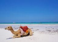 Diani Beach, bienvenue au paradis