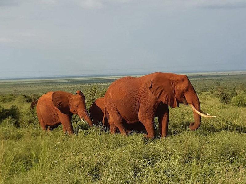 Les pistes rouge du parc de Tsavo West